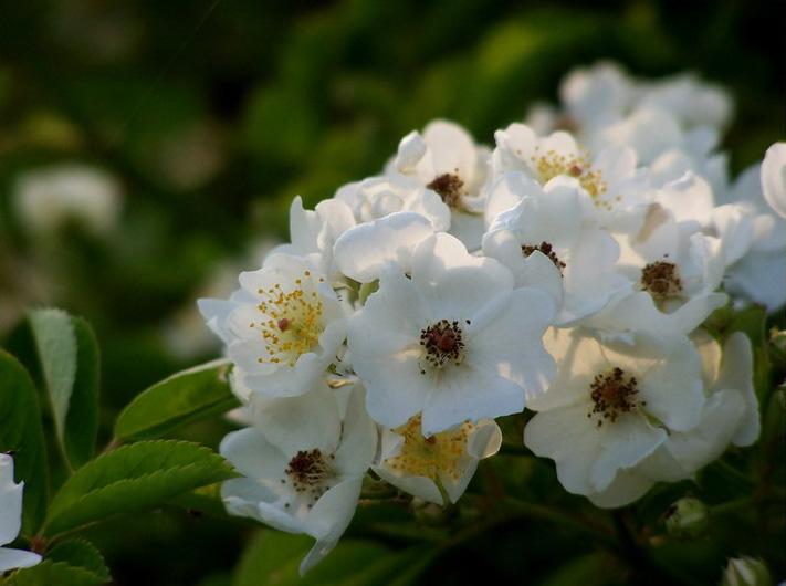 宿迁的花为什么不能买(宿迁花卉都是假货吗)插图(8)