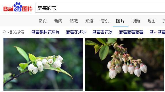 宿迁的花为什么不能买(宿迁花卉都是假货吗)插图(3)
