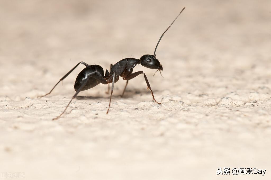 蚂蚁太多了怎么杀死 家里很多蚂蚁怎么灭