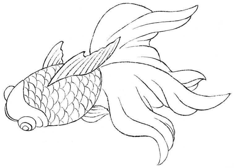 中国画零基础入门教程:分步骤讲解三种鱼类画法,简单易学的国画