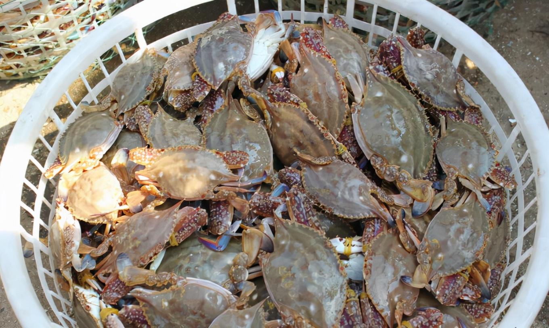 """含""""寄生虫""""最多的3种海鲜,没营养还贵,很多人还天天吃"""