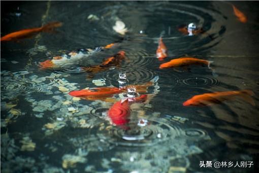 养殖什么淡水鱼值钱(北方鱼塘养殖什么鱼最赚钱)插图(2)