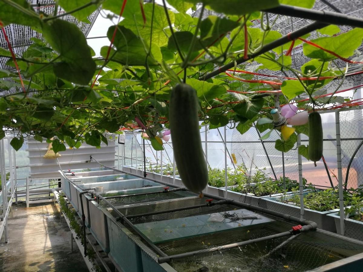 在城市种地:马来西亚大力发展城市农业