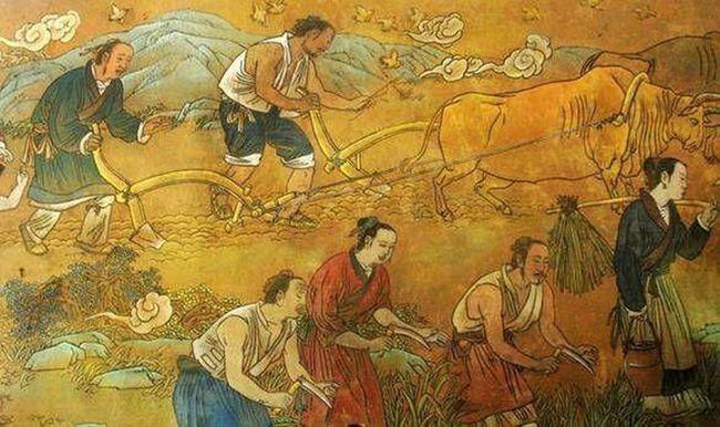 世界上最早种植水稻的国家是(水稻的祖先是什么)
