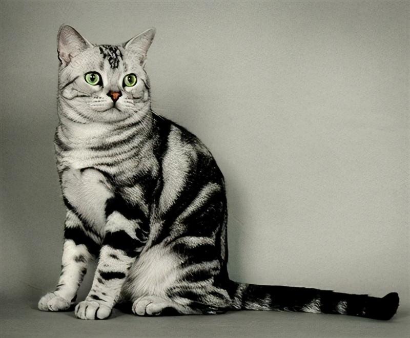 """""""死而后生""""的国产猫粮是如何逆袭的?"""