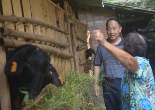 农村可以致富的几个项目,只要努力,收入还不少