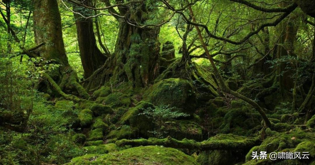 什么是现代社会的丛林法则