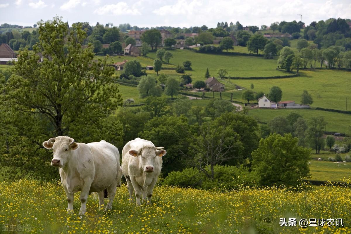 农村喊了多年的养殖业终于迎来发展契机,国家不再搞一刀切式禁养
